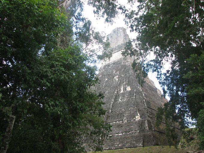 ジャングルを抜けると現れる、大ジャガーの神殿!