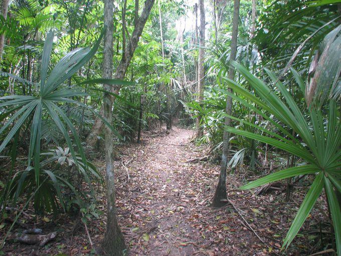 ティカルは、ジャングルの中にある遺跡!