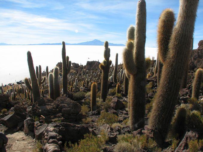 珊瑚礁の化石でできた島!サボテンが群生するインカワシ島。