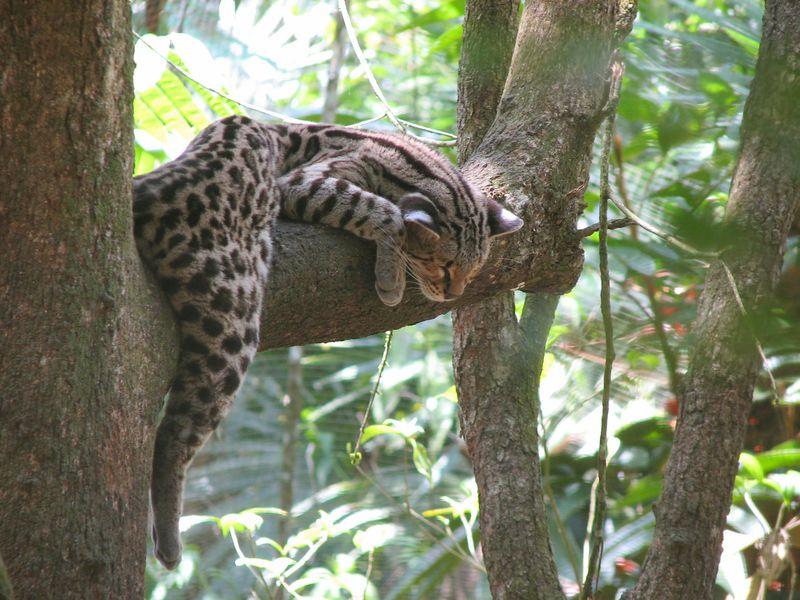 小さくも偉大なジャングル!ベリーズ動物園で野生の生命に出会おう!