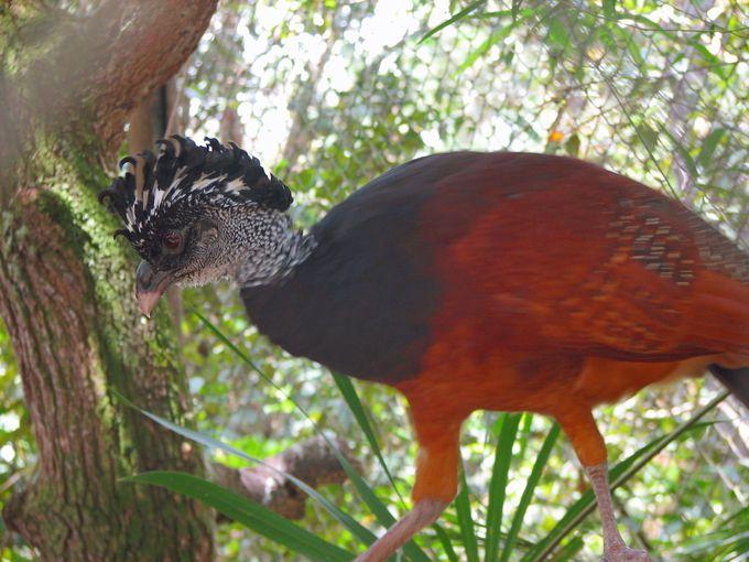 鳥好きも感動!中米の珍しい鳥もたくさん!