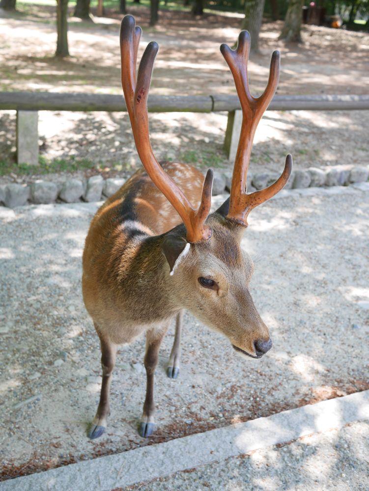 奈良公園までわずか5分!鹿たちにもすぐ会える最高の立地