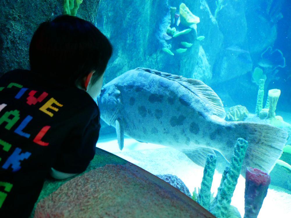 見て、さわって、学んで!体験型水族館
