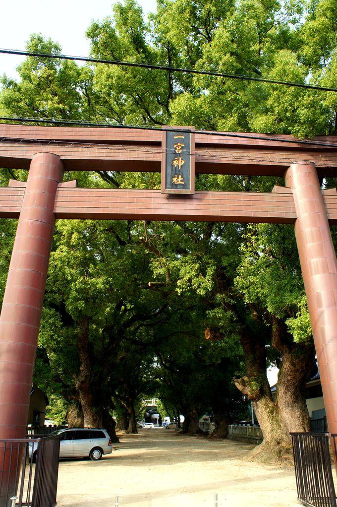 一宮神社にある樹齢1000年の一番楠