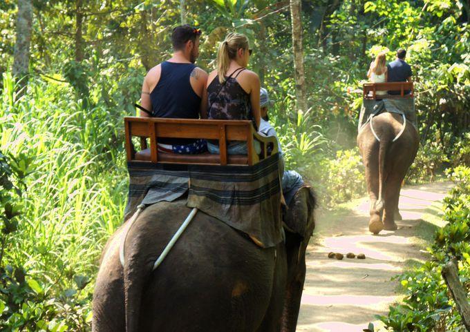 象に乗って森林浴!