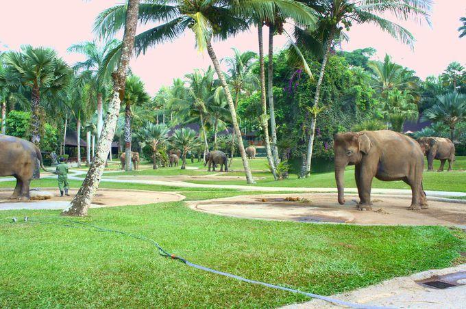 約3.5ヘクタールの敷地内は象だらけ!