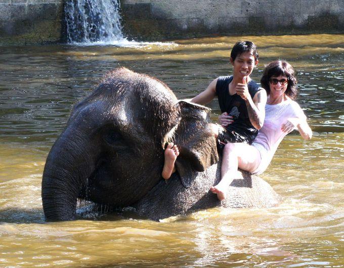 象と一緒に池で泳ぐ!