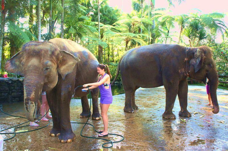 象と24時間一緒に過ごすホテル!バリの穴場「エレファント