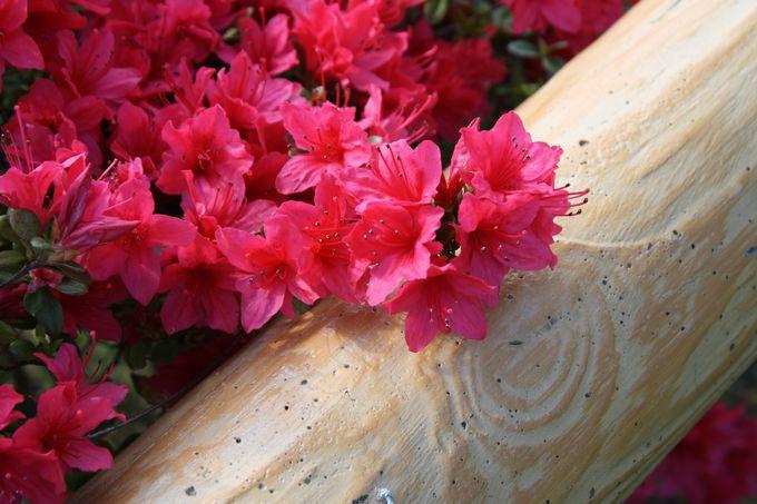 四季折々の花が楽しめる10万坪の広大な境内