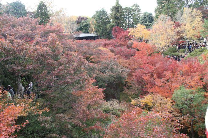 通天橋からの紅葉は何度見ても最高!