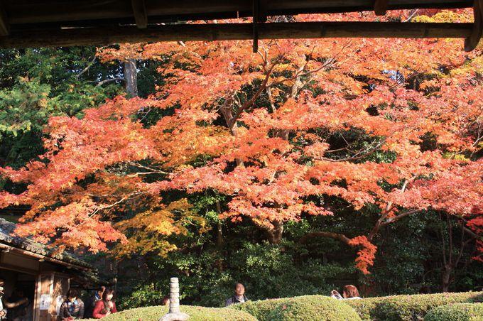 三十六歌仙の絵と詩が掲げられた座敷から眺める美しい紅葉。