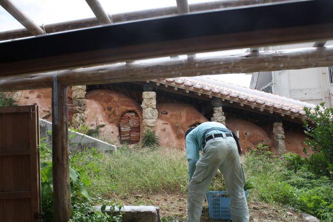 琉球瓦と登り窯。壺屋に居ることを実感できる沖縄情緒たっぷりの眺めもご馳走!