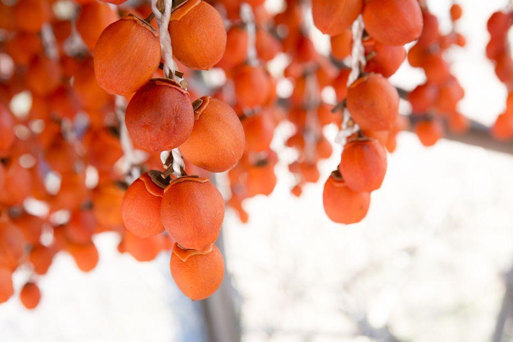柿は神様から与えられた食べ物?!