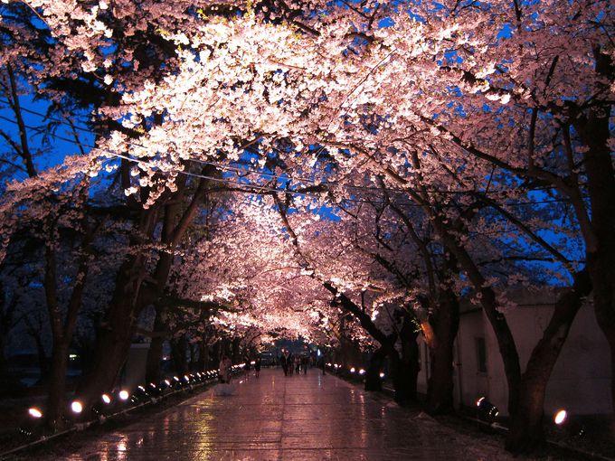 ライトアップ夜景遺産認定の夜桜を見に行こう「新潟・高田城」