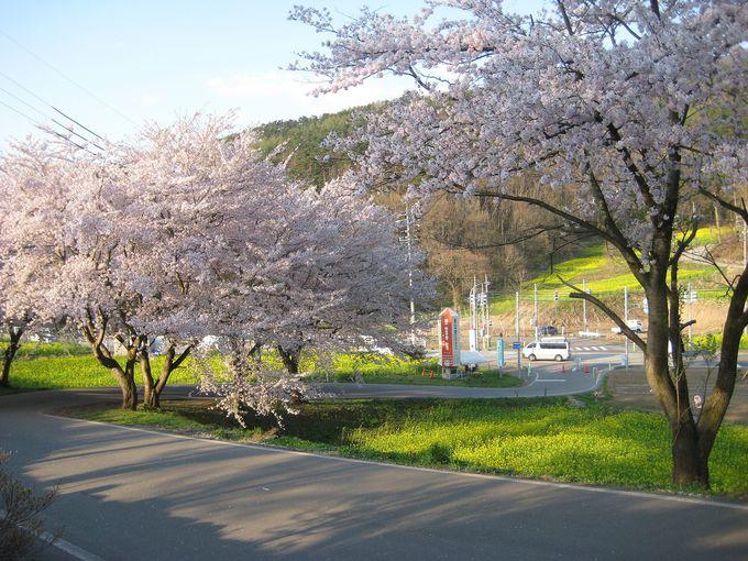 こいのぼりや桜も楽しめる!