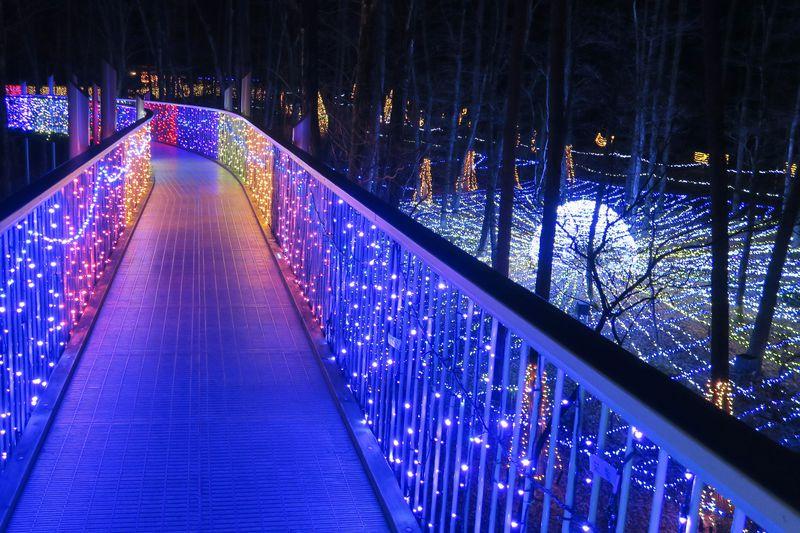 長野・国営アルプスあづみの公園「光の森のページェント」でロマンチックな夜を