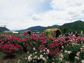 千曲川のほとりでバラを楽しむ!長野 坂城町「さかき千曲川バラ公園」