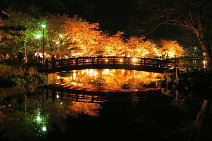 「夜」はライトアップで!熱気球と桜が一緒に楽しめる!