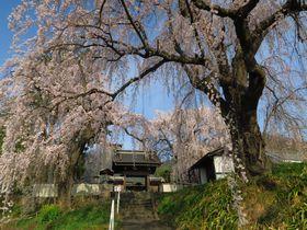 善光寺の門前町・長野市で楽しむ「史跡・古刹と桜」3選