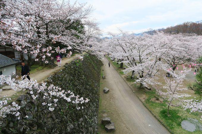 4月中旬〜下旬 「小諸市」趣のある景色と一緒に楽しむ「懐古園」