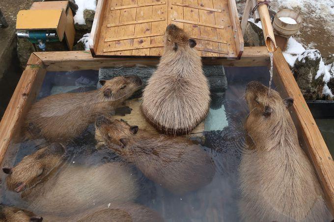 須坂市動物園は季節にちなんだイベントが盛りだくさん!まるっと一年楽しもう!