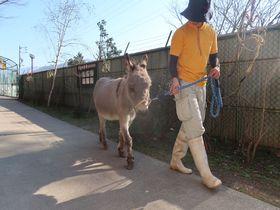 山の麓の小さな動物園!長野県「須坂市動物園」でふれあい体験