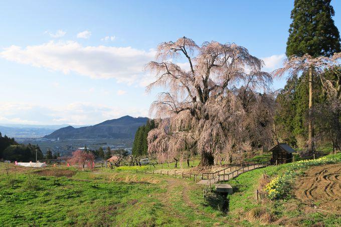 水中のしだれ桜(高山村)
