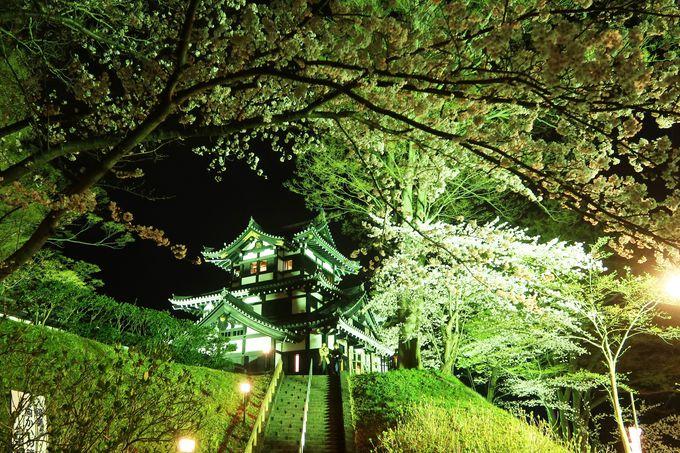 水面に映る桜とボンボリと高田城三重櫓!