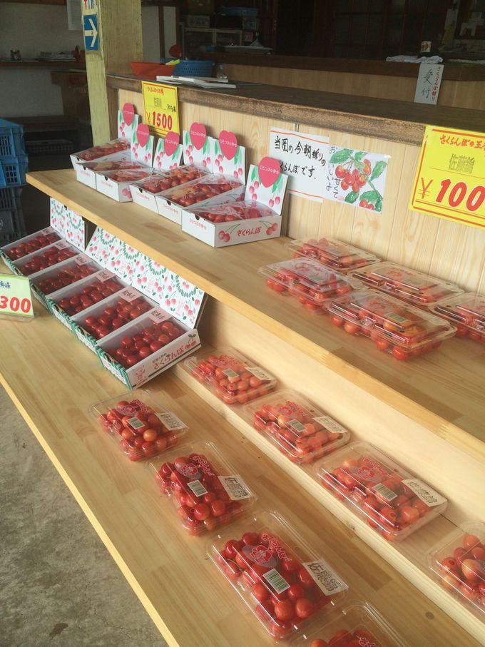 お土産には朝取りの旬のさくらんぼ!「小野りんご園」