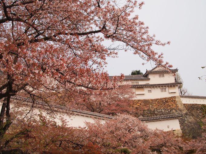 白鷺と桜のコラボが秀逸!美しい世界遺産の名城「兵庫・姫路城」