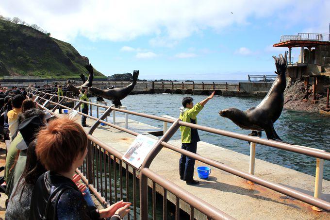 海獣公園がワイルド「おたる水族館」