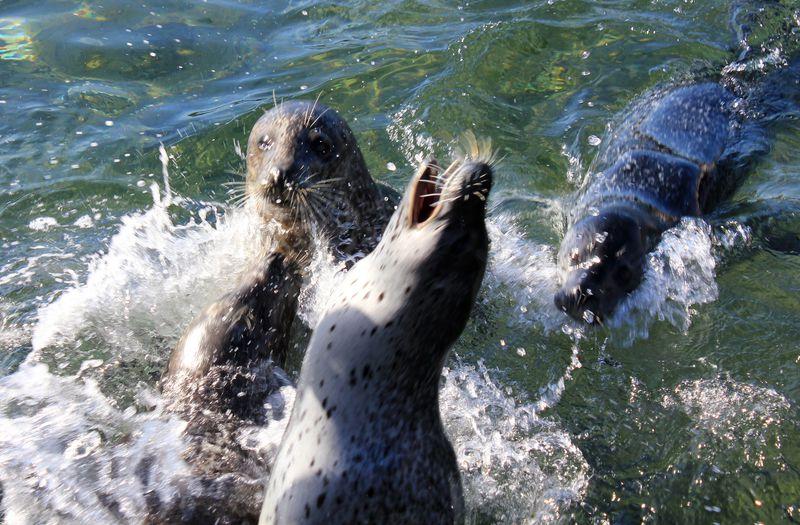 参加型のショーは必見!海の地形を利用した「おたる水族館」