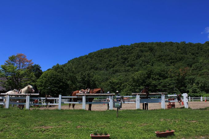 羊蹄山を眺めながら、馬でゆらゆらお散歩