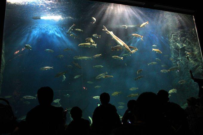 1日目:「千歳水族館」で北海道の海の生き物たちに触れよう