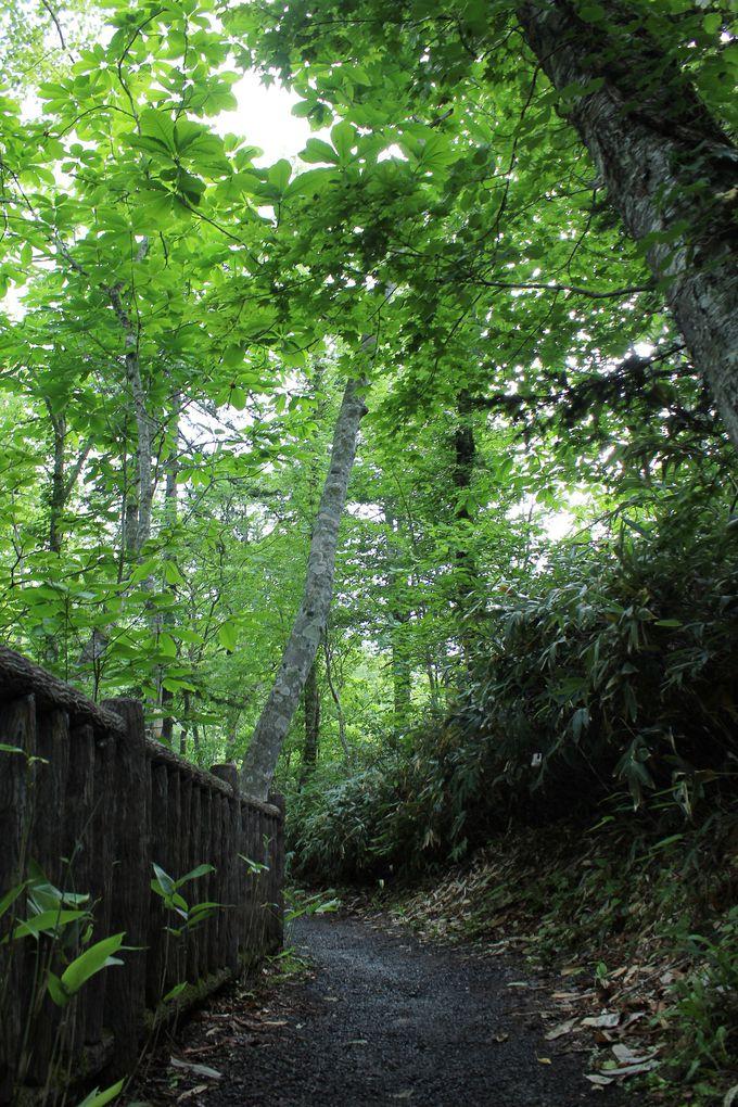 恵庭の奥座敷「恵庭渓谷」3つの滝