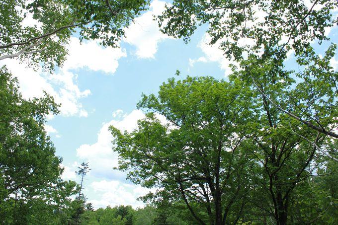 晴れた日には空中散歩がオススメ!