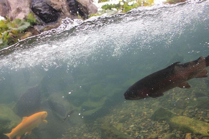 凍った川の展示は世界初!「その季節ならでは」が見られる