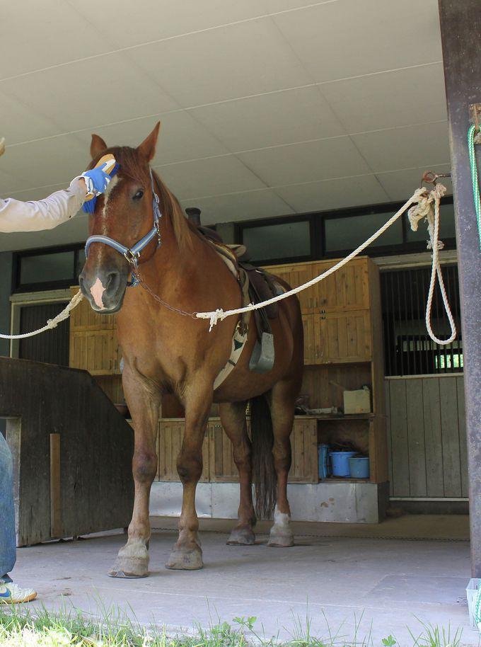 乗る前に馬と仲良くなれる!お世話が出来る「ベストフレンドコース」