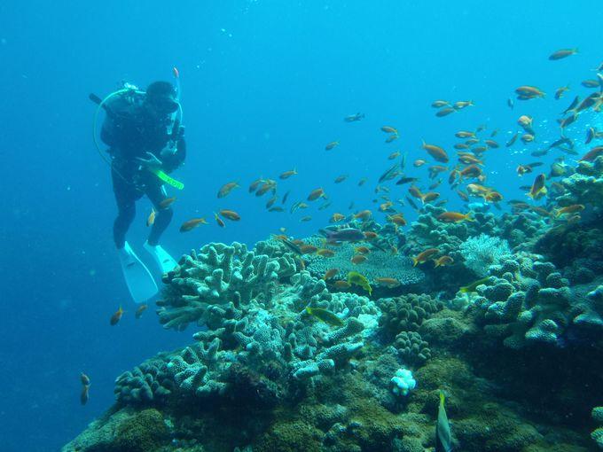 たまにはサンゴ、海底温泉、癒し系のポイントも