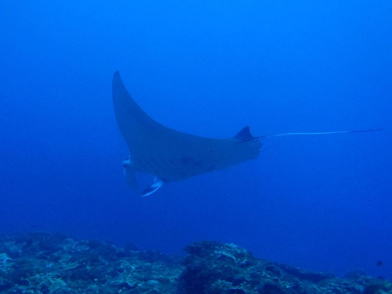 日本最後の秘境・トカラでダイビング!大物、回遊魚を狙おう!