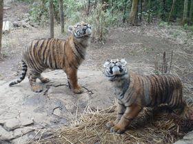 世界の動物たちに会いに行こう!よこはま動物園ズーラシア