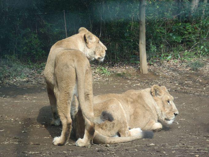 4.よこはま動物園 ズーラシア