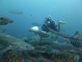 サメとエイが乱舞する海〜南房総・伊戸でダイビングしよう!