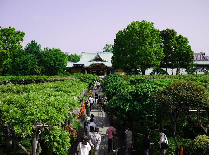 初夏から夏にかけては一面に広がる爽やかなグリーン