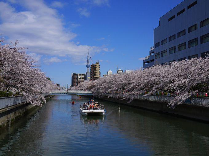 運河沿いに立ち並ぶ桜が水面にこぼれ落ちるよう
