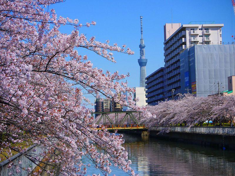 東京のお花見スポット9選!桜の見頃はいつ?穴場はどこ?