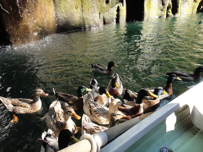 絶景!!滝を間近で見られる!ボート体験と鴨の餌やり