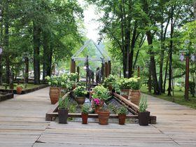 薔薇の庭園を散策!ペットと一緒「軽井沢タリアセン」