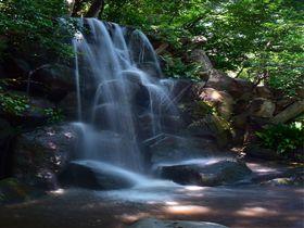 メトロで行く都内の避暑地!暑い夏に自然のひんやり公園5選