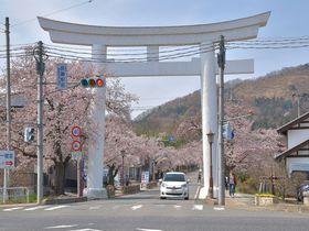 秩父のおすすめ桜スポット8選 桜を見てパワーチャージの春を